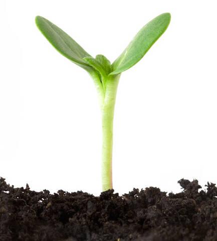 Pflanze für Ausbaustufe 6