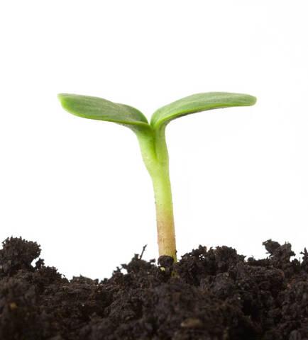 Ausbaustufen in Pflanzenform