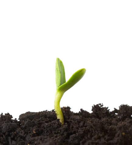 Pflanze für Ausbaustufe